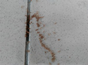 Муравьи на вокзале Butterworth